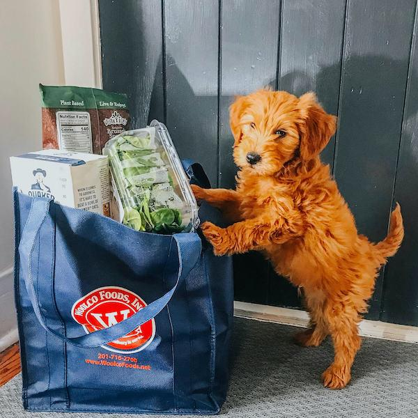 Woolco Foods Pup