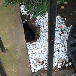 A Growing Rat Condo on 89th Street