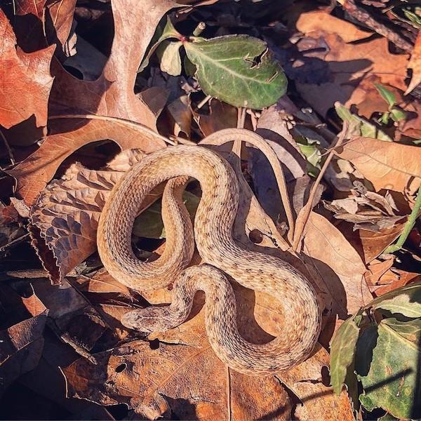 Morningside Park Snake
