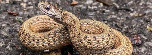 snake sighting NYC
