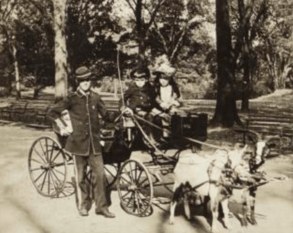 children riding goat carriage
