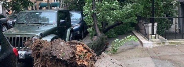 storm clobbers upper west side tree