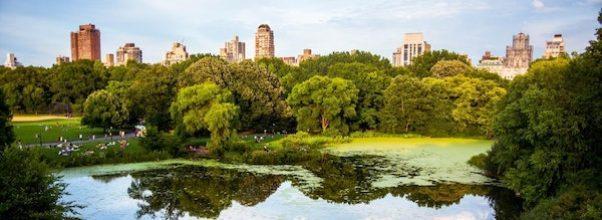 Ellen Reid SOUNDWALK Central Park