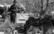 The Horses Return to Central Park