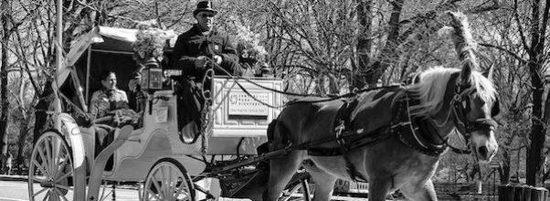 horse carriages return central park