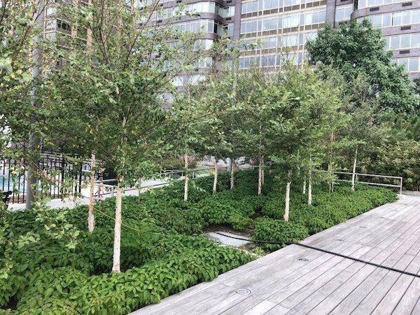 new trees riverside park