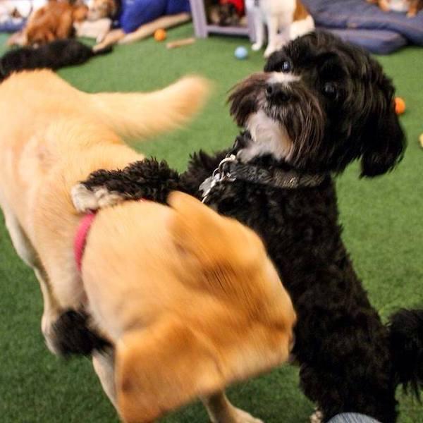 puppy playdate