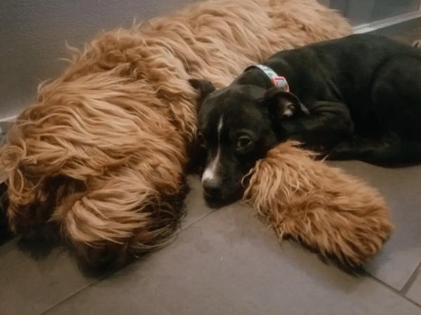 puppy sleepover