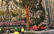 2020 Rockefeller Center Christmas Tree Arrives, People Scratch Heads