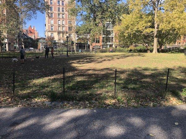 dogs in closed lawns near AMNH