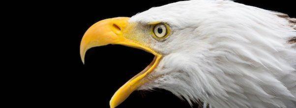 bald eagle sighting nyc