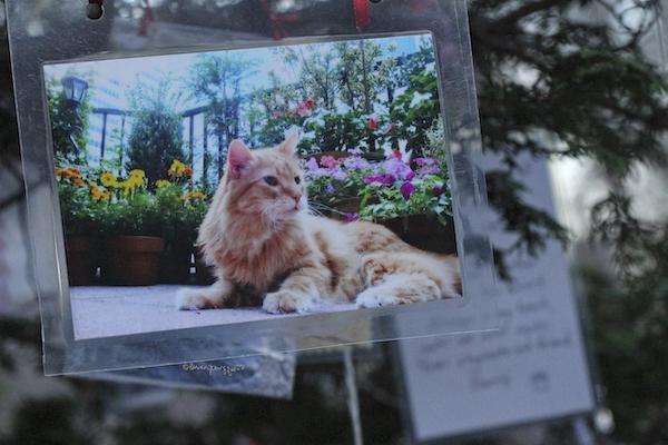 cat memorial central park
