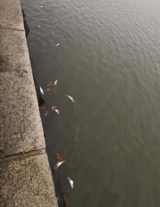dead bunker fish hudson river nyc