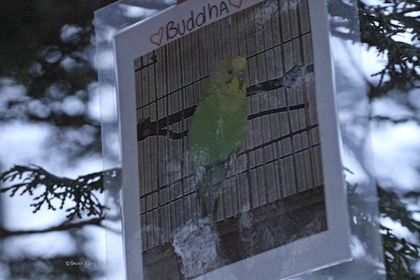 pet bird memorial