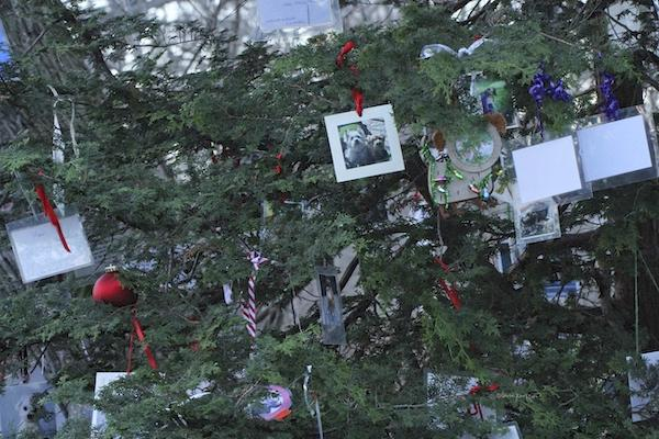 pet memorial tree central park