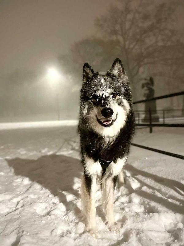 snowstorm 2020