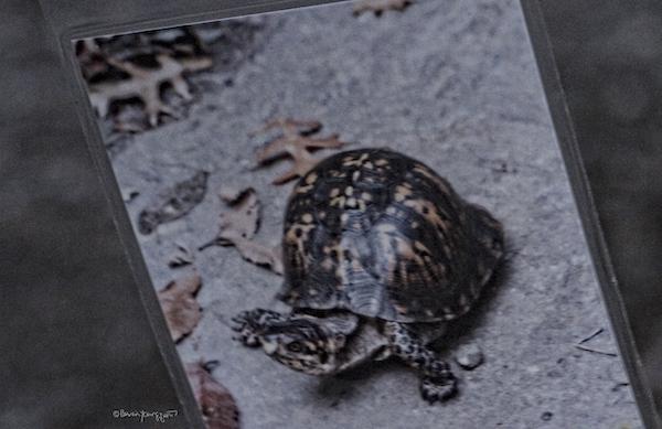 turtle memorial