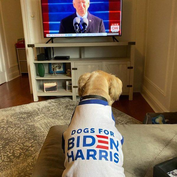 Dogs for Biden Harris