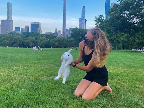 rabbit central park nyc