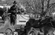 carriage horse aysha anniversary