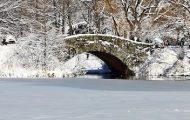 Huge Group Walks on Central Park's Frozen Lake