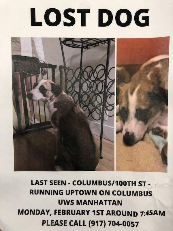 lost dog columbus ave