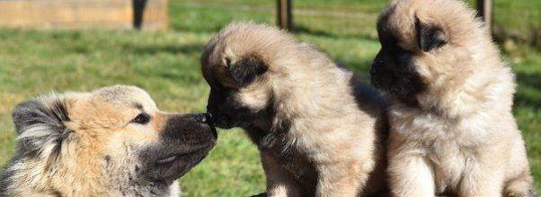 Texas dog family reunites Upper West Side