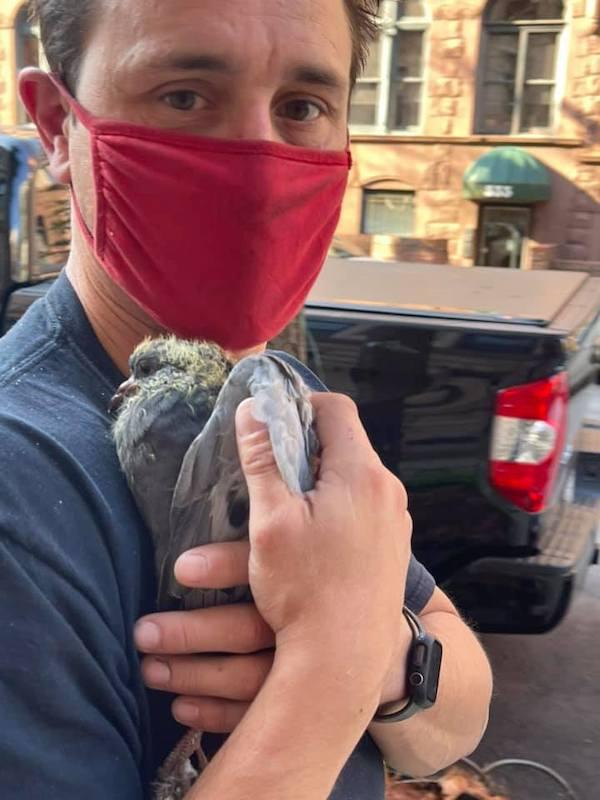 building super saves pigeon