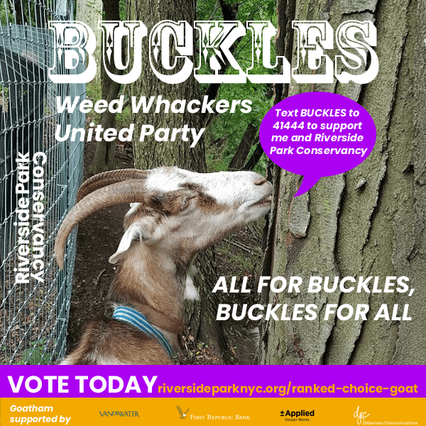 Buckles campaign poster