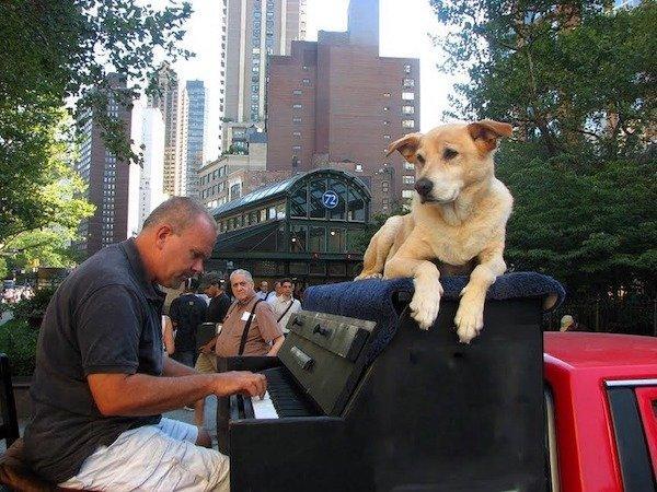 traveling piano man