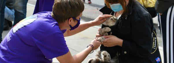 The Blessing of the Animals at St. Paul and St. Andrew