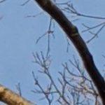 bald eagle sighting riverside park