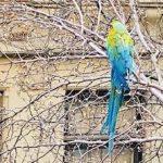 escaped parrot upper west side