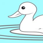 pet ducks rescued central park